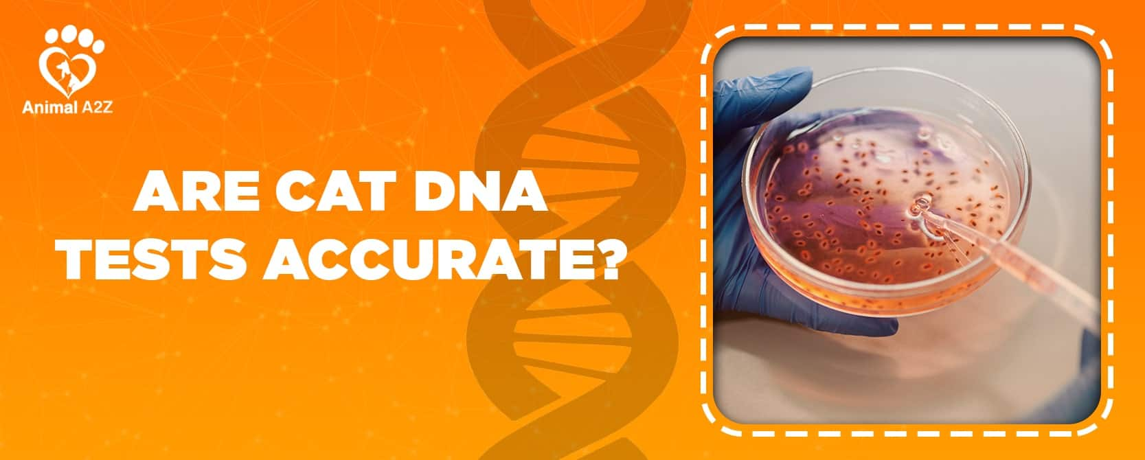are cat dna tests accurate