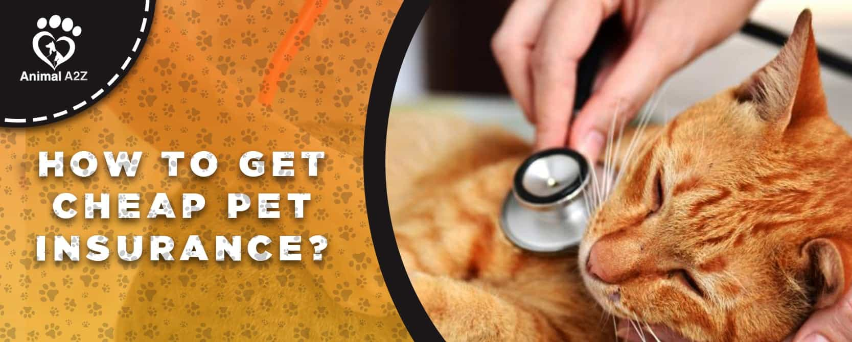 how to get cheap pet insurance