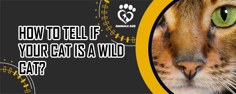 how to tell if your cat is a wild cat