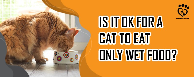 Is it OK for a cat to eat only wet food?