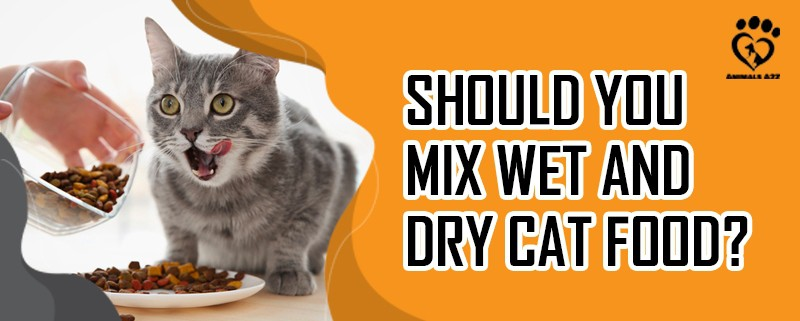 Should you mix wet and dry cat food?
