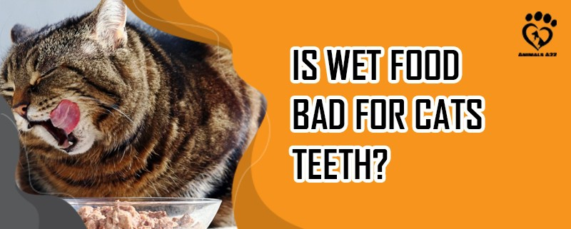 is wet food bad for cats teeth