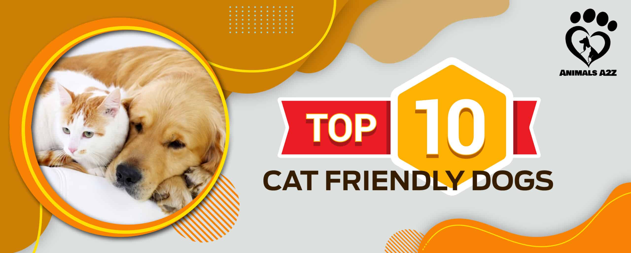 Top 10 Cat-Friendly Dogs