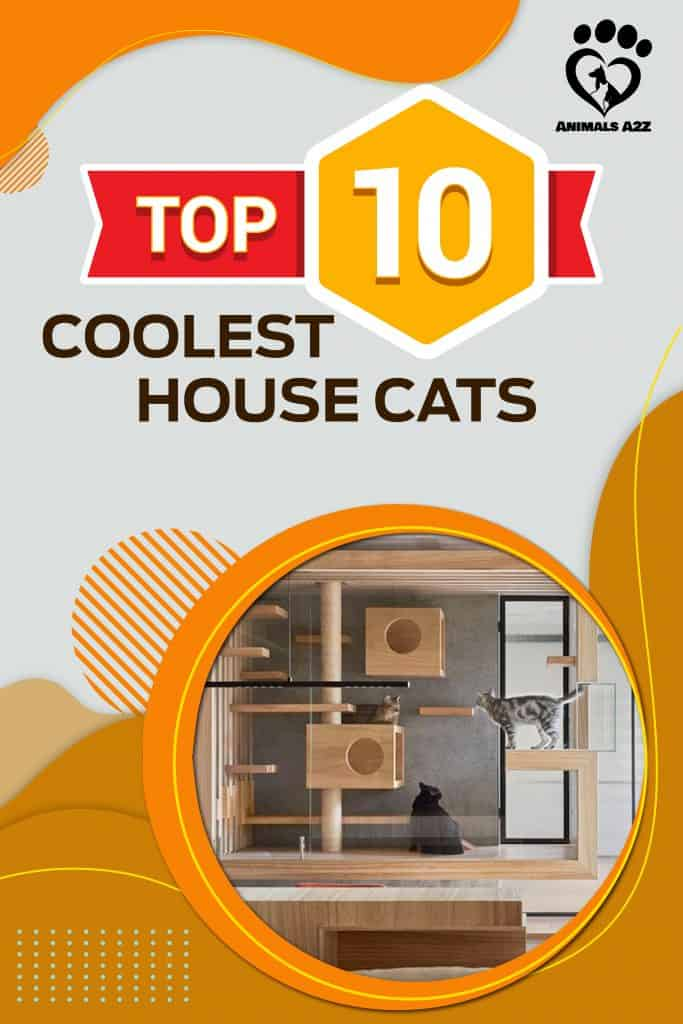 Top 10 Coolest House Cat breeds