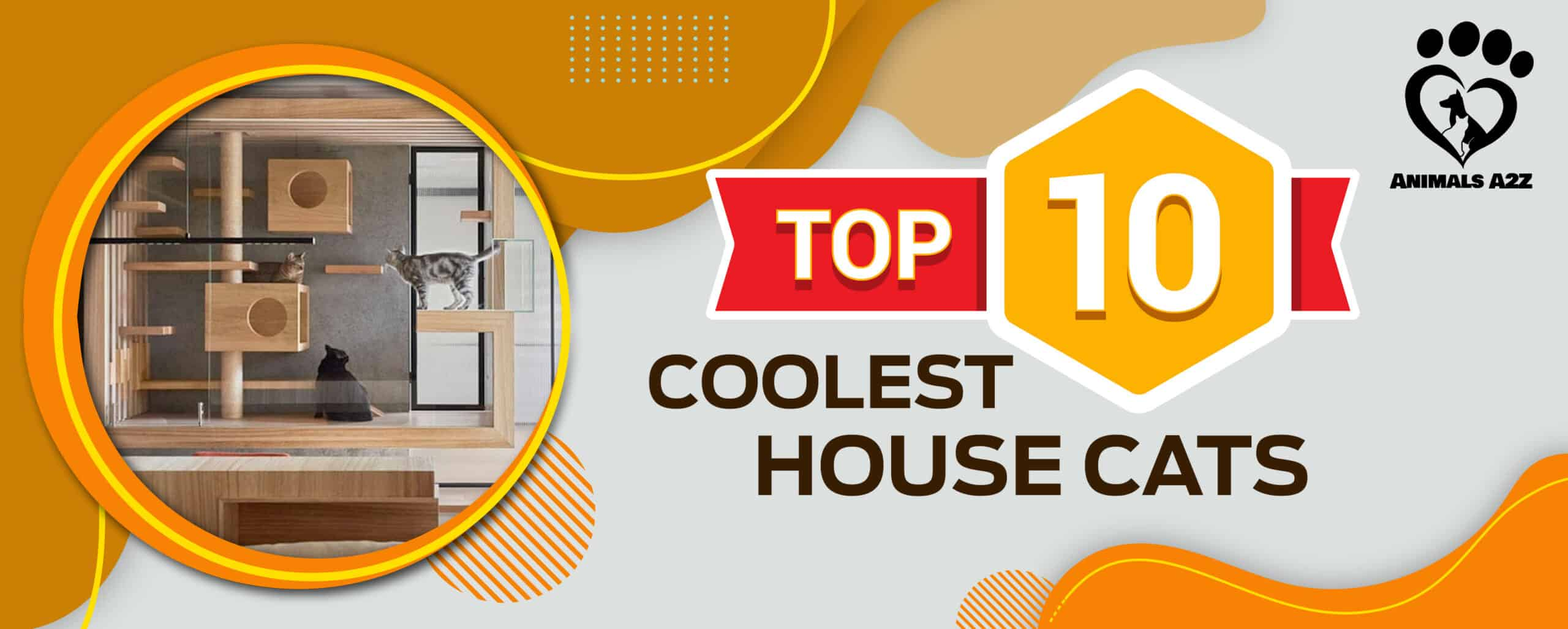 Top 10 Coolest House Cats