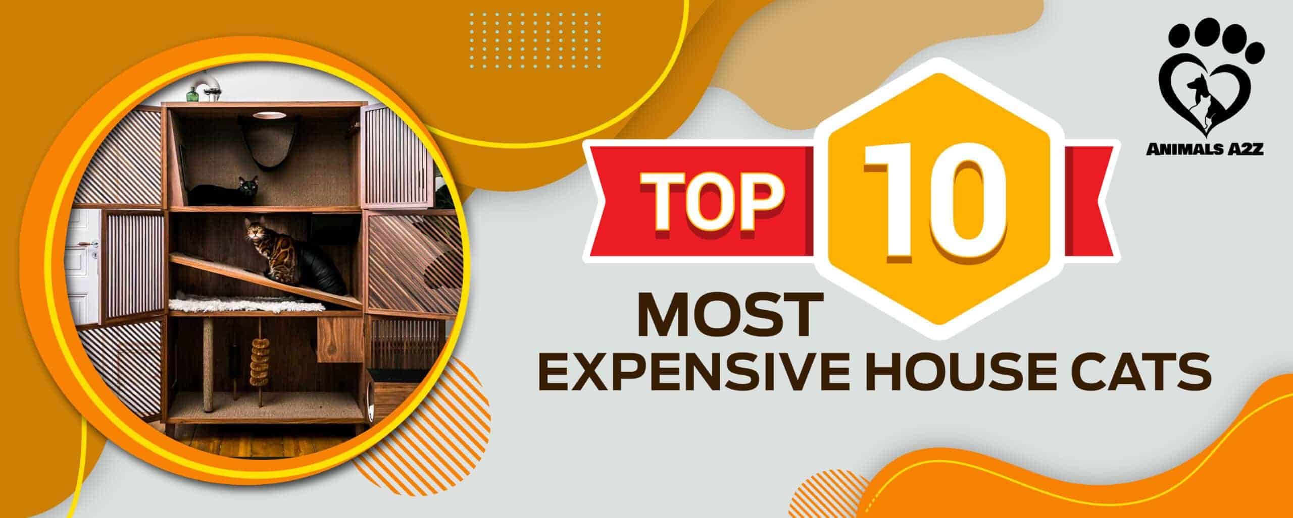 top 10 most expensive house cats