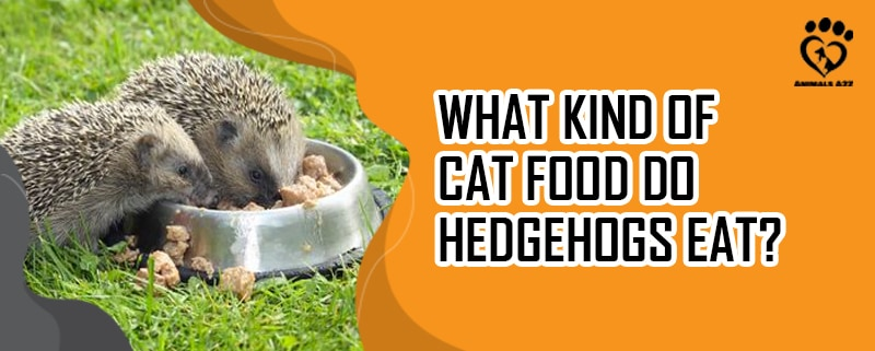 what kind of cat food do hedgehogs eat