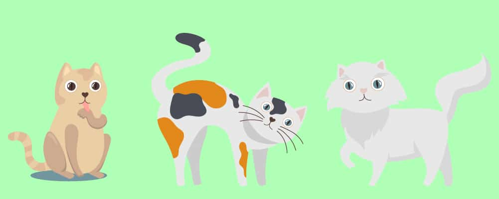 4. A Guide To Cat Moods