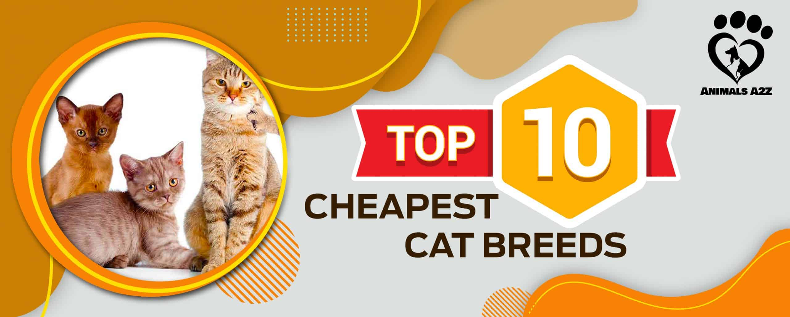 top 10 cheapest cat breeds