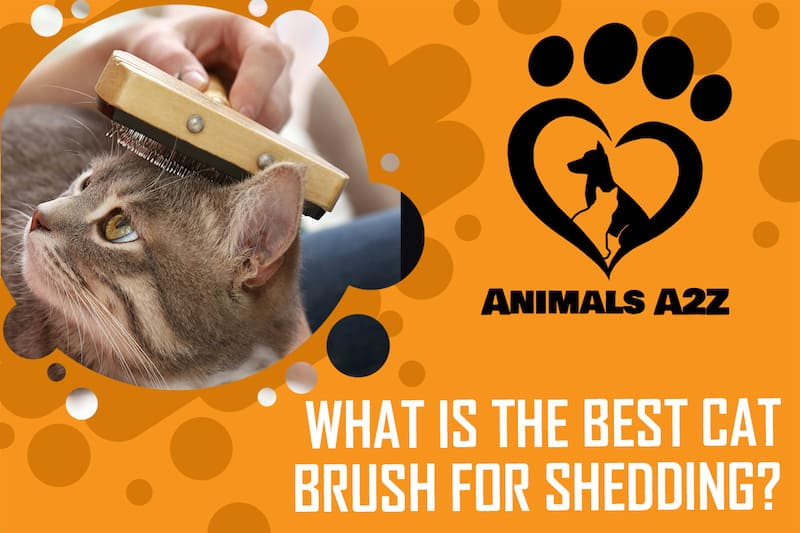 What is the best cat brush for shedding?